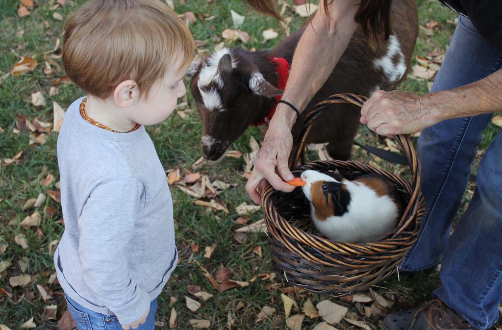 Es muy importante considerar todas las recomendaciones que dan los veterinarios para tener un cuyo como mascota. (ESPECIAL)