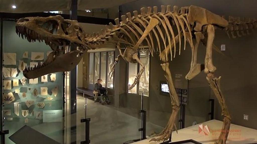 A un paleontólogo en California (EUA) se le ocurrió que era posible calcular cuántos Tiranosaurios rex hubo y con su equipo ha creado un método que podría usarse para estimar la población de otras especies extintas, según un artículo que publica la revista estadounidense Science. (ESPECIAL)