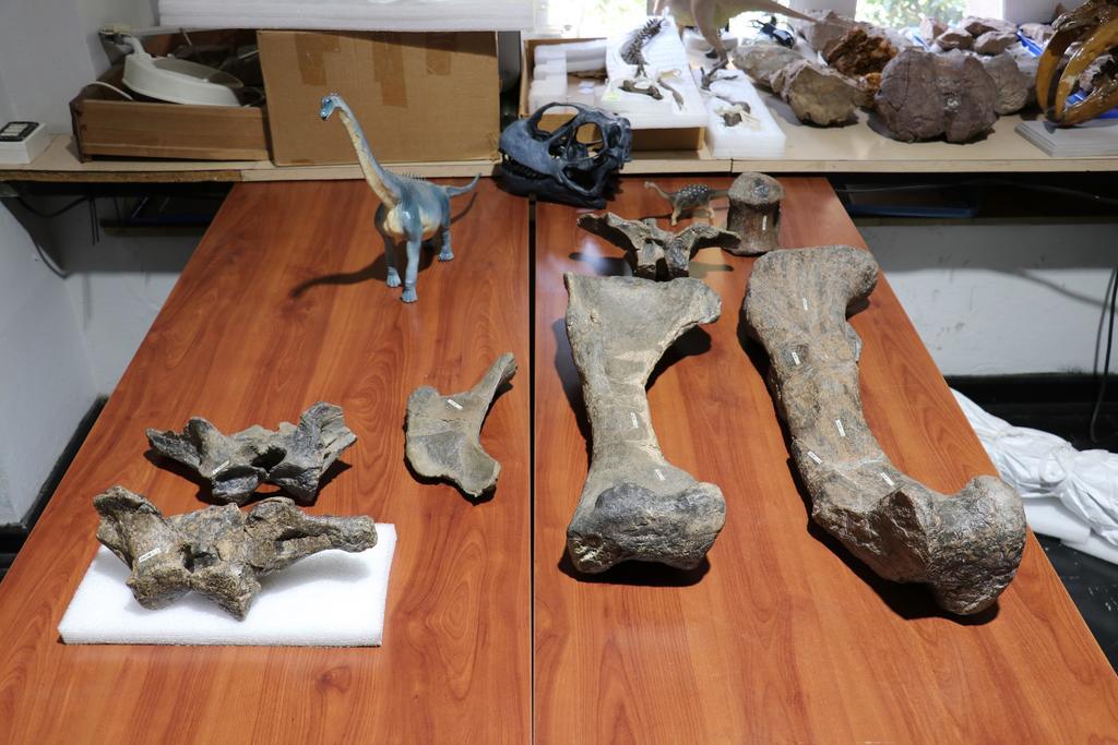 El Ministerio de las Culturas de Chile presentó el hallazgo de una nueva especie de dinosaurio, de 6.3 metros de longitud estimada, que habitó lo que hoy se conoce como la región de Atacama (norte) durante la parte final del periodo Cretácico, entre 80 a 66 millones de años atrás. (ARCHIVO)