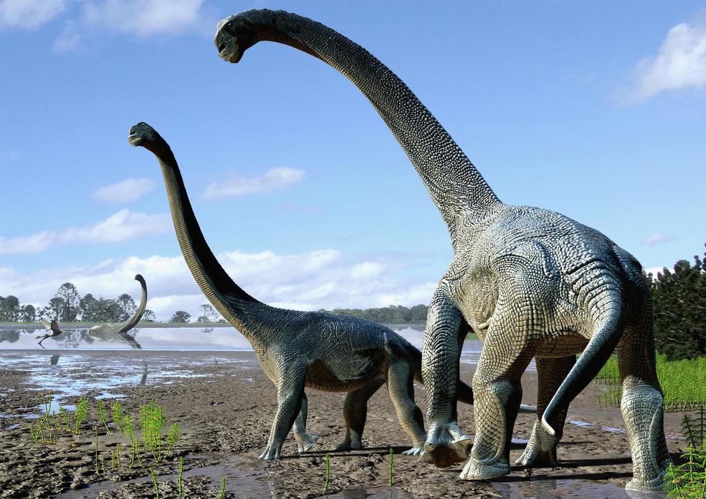 Con más de 25 metros de largo y 5 de altura, un estudio científico identificó una nueva especie de saurópodo, que pobló la Tierra hace más de 92 millones de años, como el dinosaurio más grande descubierto en Australia. (ESPECIAL)