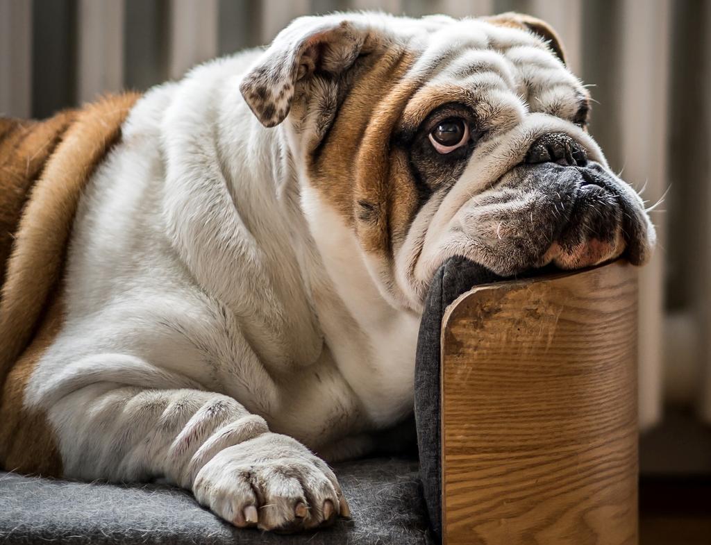 Evita que tu mascota tenga problemas graves de salud. (ESPECIAL)