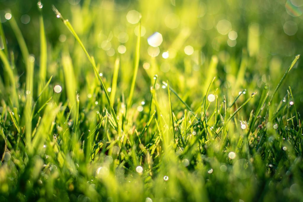 Poda tu jardín con frecuencia, sobre todo cuando comience la temporada de calor. (ESPECIAL)