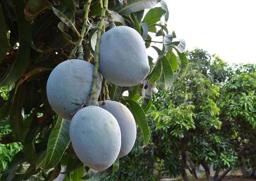 Luego de un robo, la pareja de horticultores decidió contratar seguridad privada. (INTERNET)